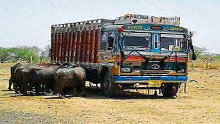 Meat transporter attacked by group of men in Gurgaon, 1 arrested