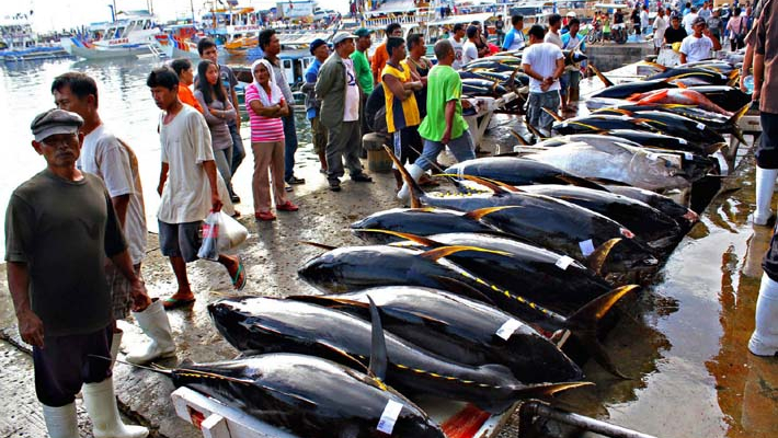 Record USD 3.1 million paid in New Year's tuna auction at Japan's new market