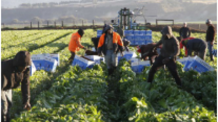 Australia extends 'backpacker visas' to ease farm worker shortage