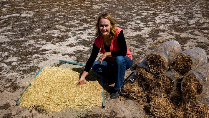 Scientists fight to fix the world's soils