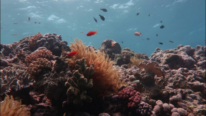 Great Barrier Reef has lost more than half of its corals in past 3 decades