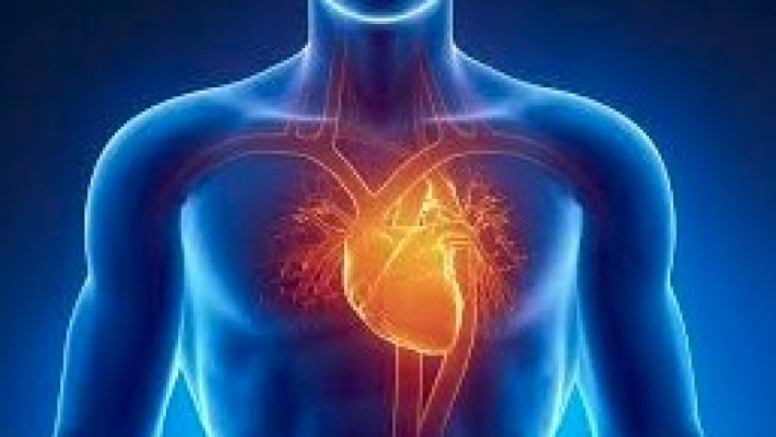 New cell that can heal hearts discovered