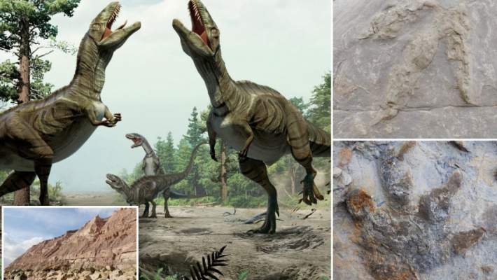 Footprints of last dinosaurs to walk 110mn years ago found on UK cliffs