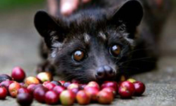 Asian Palm Civet rescued from Agra airport
