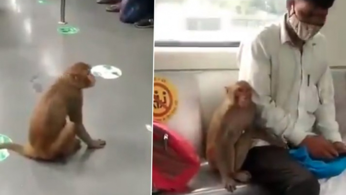 Delhi Metro plans to work out SOPs after monkey enters train