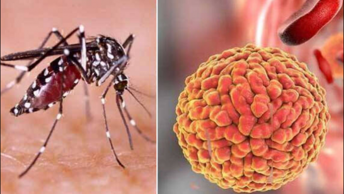 Four test positive for Zika in Kerala, total reported cases 42