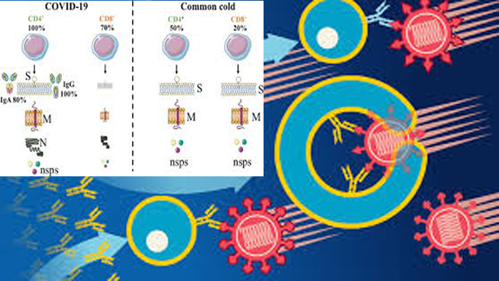 Abnormalities in immune system's T cells linked to severe COVID-19: Study