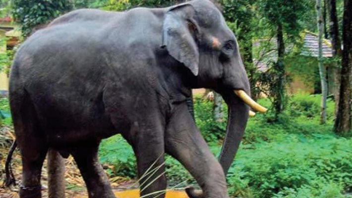 Woman trampled to death by wild elephant on forest-fringe road