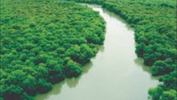 Godrej & Boyce, WWF India launch Magical Mangroves campaign