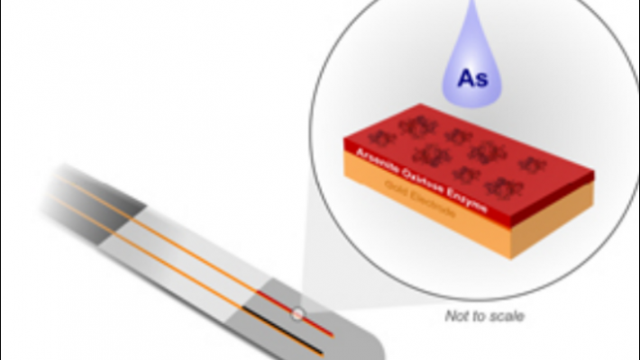 Scientist develops ultra-sensitive, easy-to-use sensor for detecting arsenic in water, food