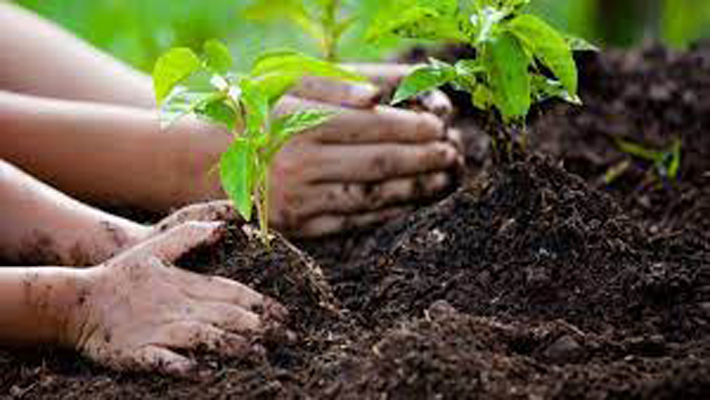 Indore in top three for tree-planting drive